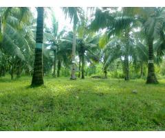Coconut Farm 1000sqm