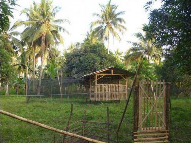 2 Ha Mango Farm Livestock Koronadal City General Santos