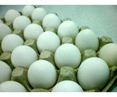 fresh eggs, fresh milk and milkbar for sale :)