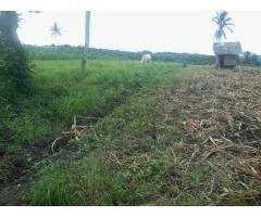 Agricultural Land Polomolok
