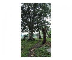 Farm lot w/ fruit bearing trees
